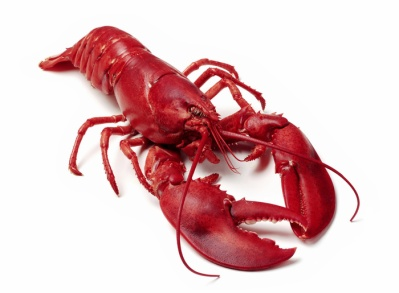 812lobster.142182414_std