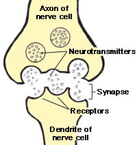 Chem._Synapse_scheme.jpg